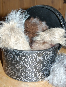 bucket of tribbles