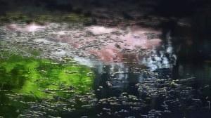 garden-of-words_rain